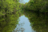 Tree reflection in the water — Stock Photo