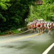 Bicycle road race — Stock Photo