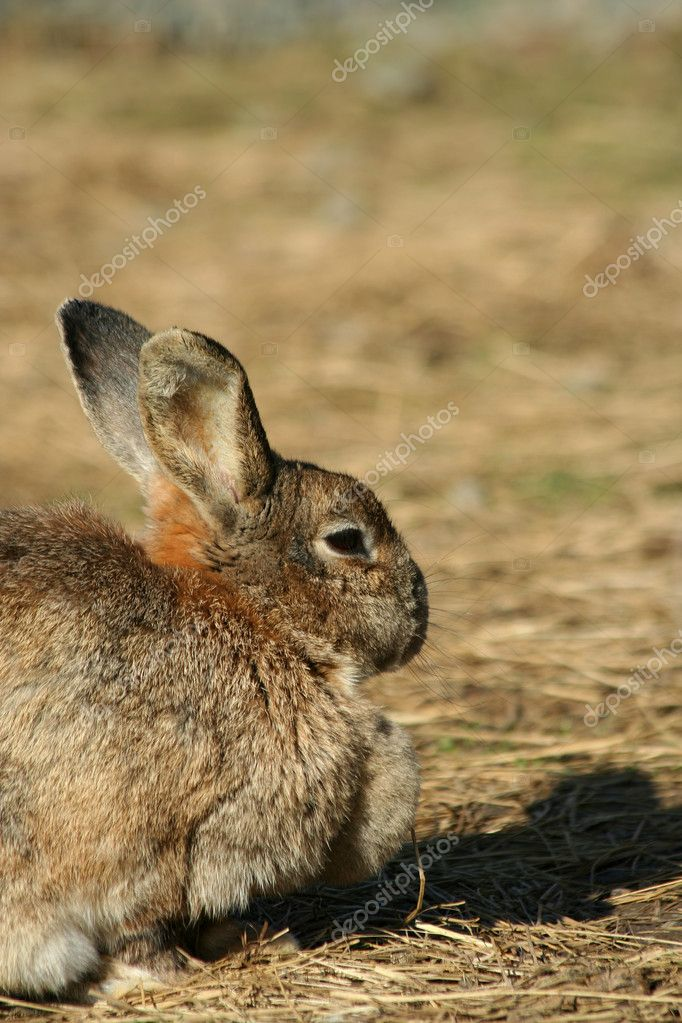A Close up of a rabbit — Stock Photo #3804157