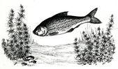 Fish in water — Stock Photo