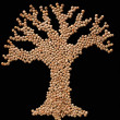 Legume tree — Stock Photo