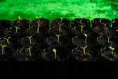 Young seedlings — Stock Photo