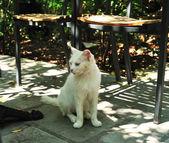 Rolig vit katt — Stockfoto