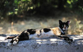 Tortie cat — Stock Photo