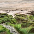 Coast in green — Stock Photo
