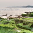 Green coastline — Stock Photo