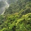 Green forest in mountain - Stock Photo
