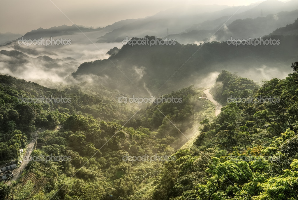Mountain landscape with mist in forest in day. — Stock Photo #2969261