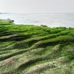 Beautiful green coast — Stock Photo