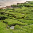 Stock Photo: Green coastline