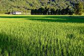 Idyllic scenery in country — Stock Photo