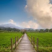 Attractive rural scenery — Stock Photo