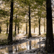 Stock Photo: Forest scenery