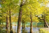 Přírodní pozadí podzimního lesa — Stock fotografie
