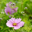 Colorful garden with flowers — Stockfoto