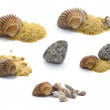 Collection of shells, stones and sand isolated on white — Stock Photo