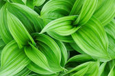 Beautiful green plant close up — Stock Photo