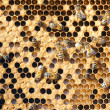 Bees — Stock Photo #2748012
