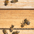 bees — Stock Photo #2760027