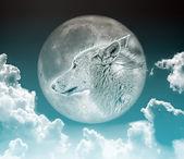 Wolf in de maanbir kadın atlama — Stockfoto