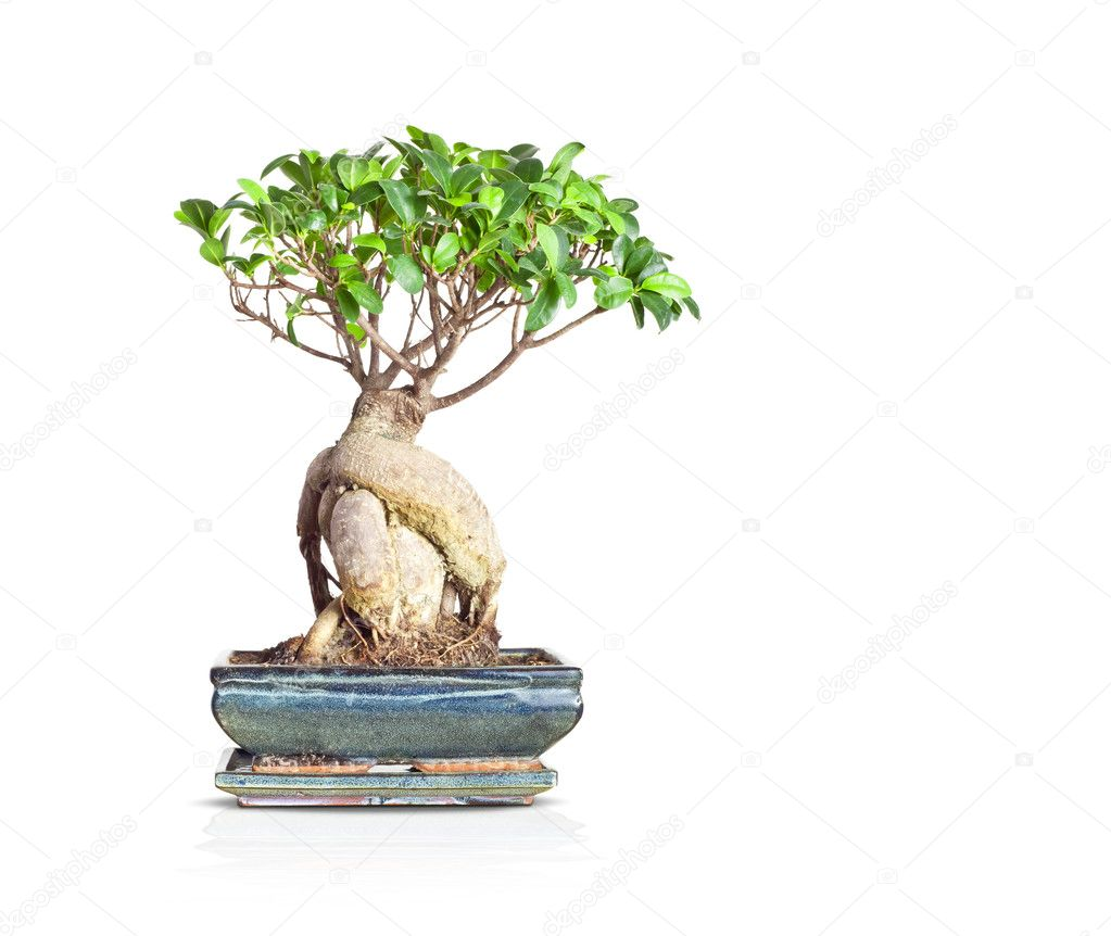 An image of a nice little bonsai tree — Stock Photo #3550385