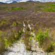 Australia grass land — Stock Photo