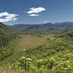 Australia rain forest — Stock Photo #3742425
