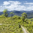 Royalty-Free Stock Photo: Tasmania rain forest