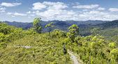 Tasmanië regenwoud — Stockfoto