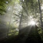 rayons de soleil — Photo