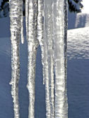 Melting icicles vertical — Stock Photo