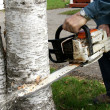 Man cutting down trees — Stock Photo