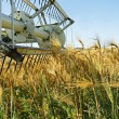 Old combine harvester stopped in barley field - Stock Photo