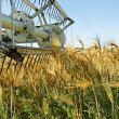 Old combine harvester stopped in barley field — Stock Photo