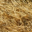Close-up freshly cut barley and oat field — Stock Photo