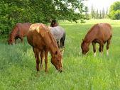 Horse graze — Stock Photo