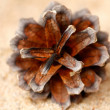 The pinecone on a sand close-up.  — Stock Photo