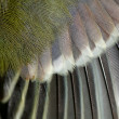 Stock Photo: Wing closeup