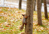 Squirrel on a tree into the park. — Stock Photo