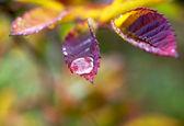 Paints rainy autumn — Stock Photo
