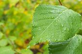 September rain — Stock Photo