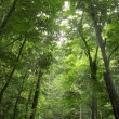 Green forest — Stock Photo #2757052