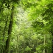 Green forest — Stock Photo #2757103