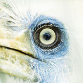 Bird eye closeup — Stock Photo