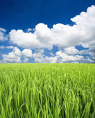 Green field and sky — Stock Photo