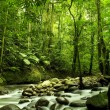 Stock Photo: Green forest and river