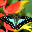 Stock Photo: Butterfly resting on plant