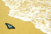 Blue butterfly on golden sand beach — Stock Photo