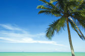 Coconut tree and beach — Stock Photo