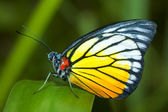 Butterfly on a leaf — Stock Photo